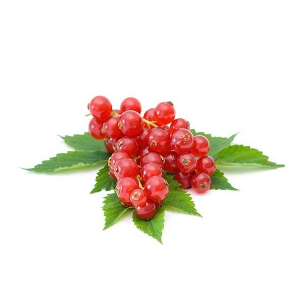 Treeberry HelloCig E-Liquid 1Liter